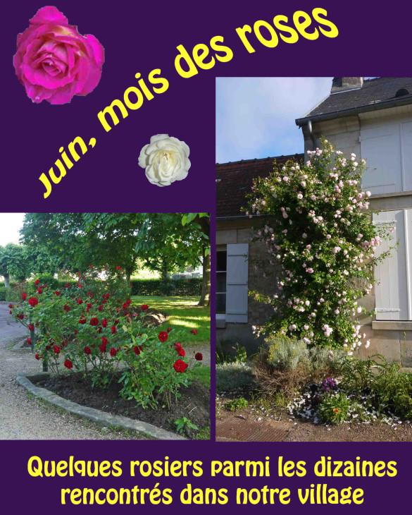 Juin-mois-des-roses-1.jpg