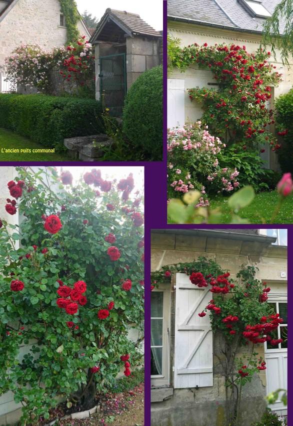 Juin mois des roses 2