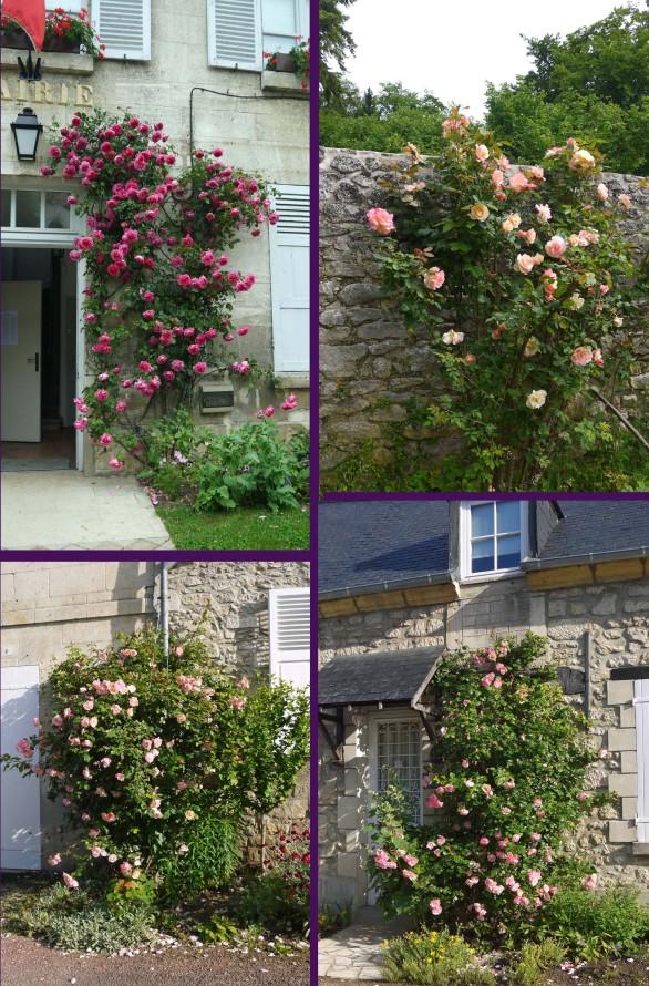 Juin-mois-des-roses-2bis.jpg