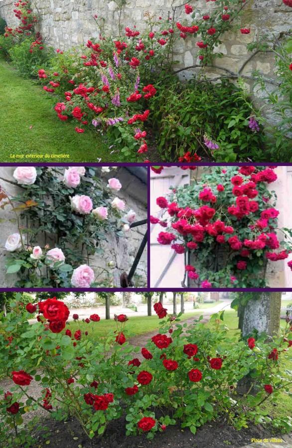 Juin-mois-des-roses-3.jpg