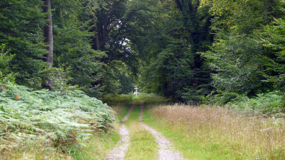 18-Chemin-d-Orrouy.jpg