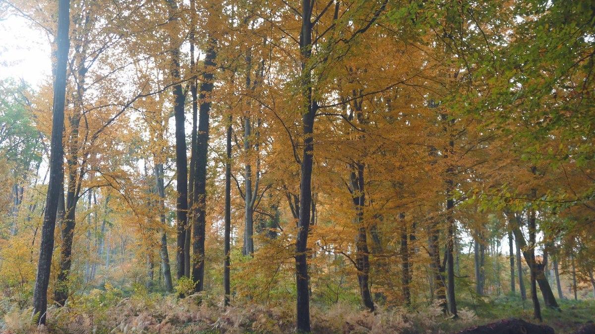 Et l'automne vient d'arriver …