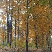 Et l'automne vient d'arriver ... - Le blog de niddanslaverdure