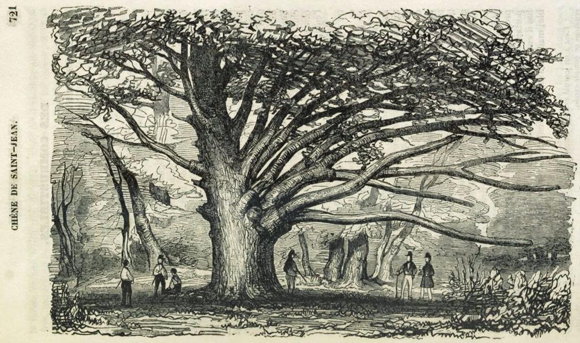 Sur le &quot&#x3B;Gros Chêne de Saint-Jean&quot&#x3B;